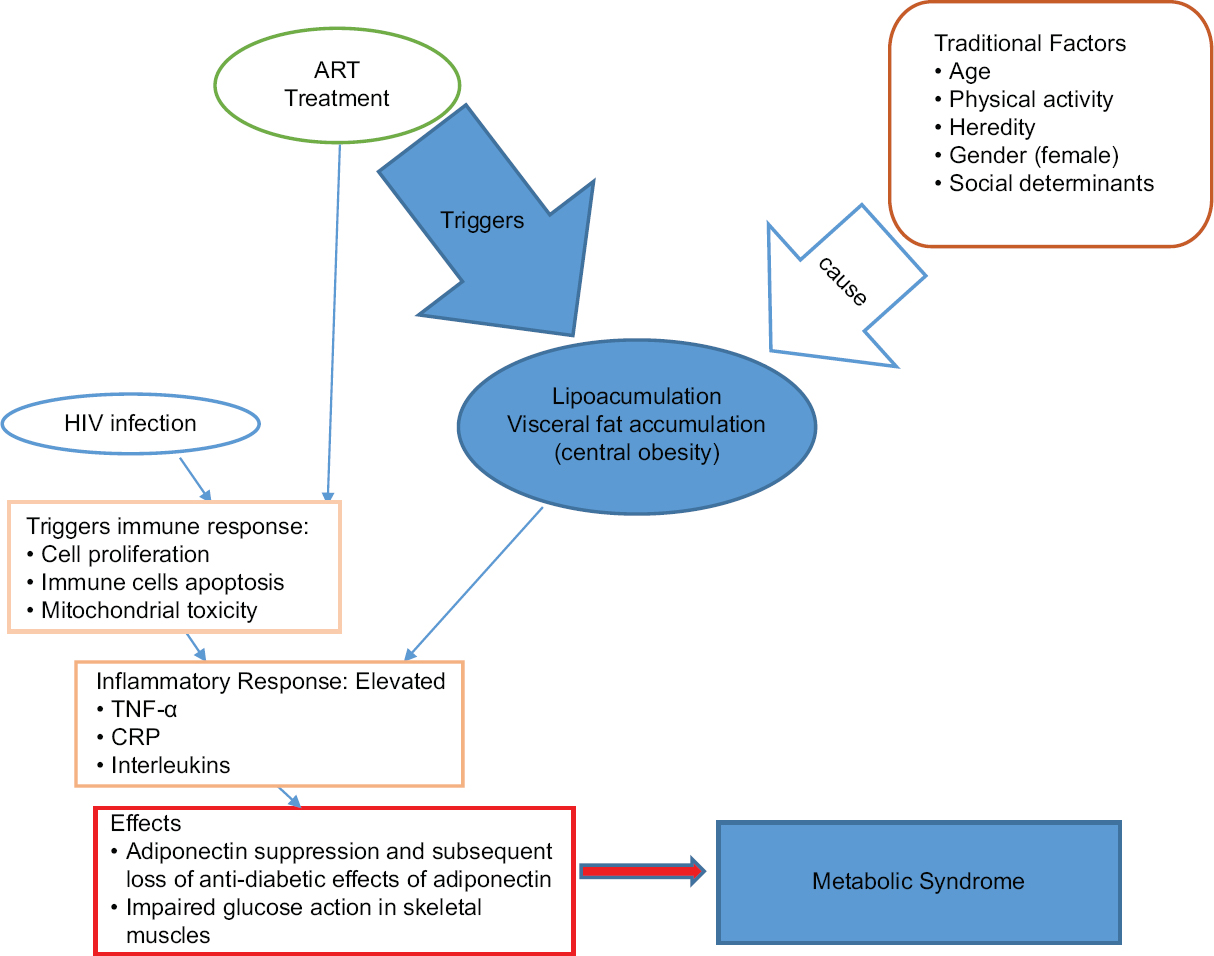 Figure 1: Summary of processes of metabolic syndrome development from HIV and antiretroviral therapy
